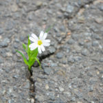 resiliencia empatia