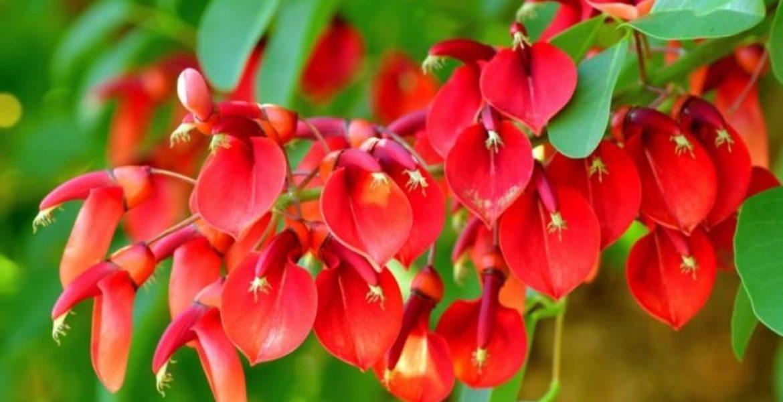 el ceibo flor nacional argentina