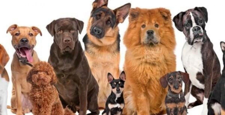razas de perro segun tu signo