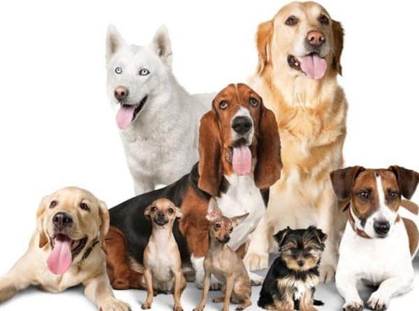 mascotas segun tu signo
