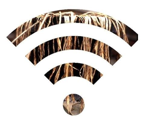 wifi y las plantas