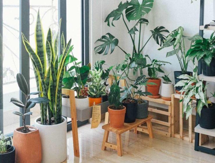 plantas que purifican el hogar