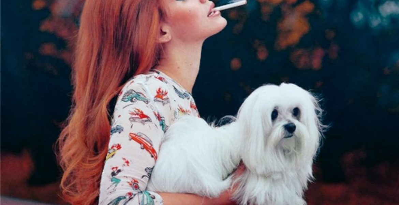 fumar frente a mascotas