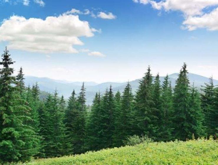 noruega contra la deforestacion