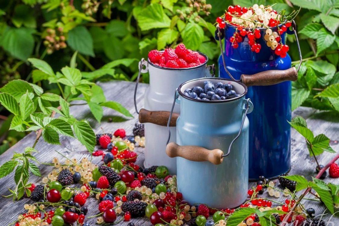 Ruta 40 y frutos rojos