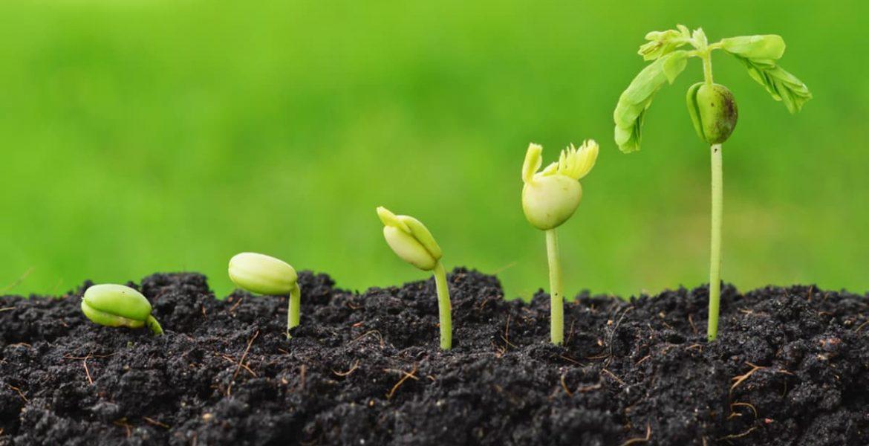 huerta banco de semillas