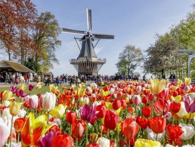 keukenhof tulipanes holanda