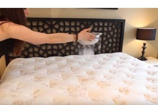 acaros bacterias cama