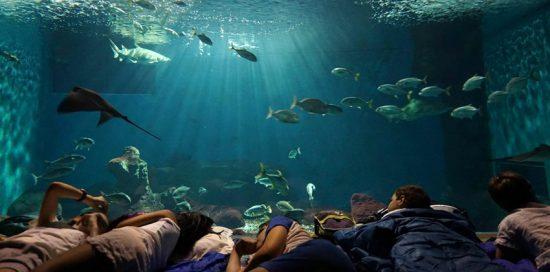 dormir en el acuario