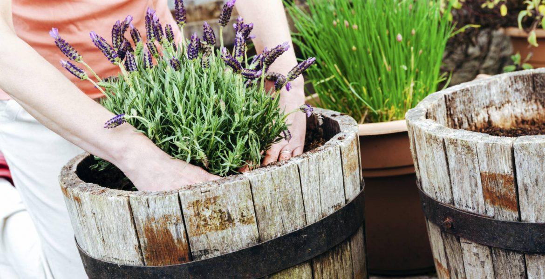 plantas botiquin natural