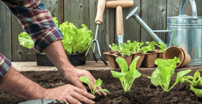 como hacer una huerta organica