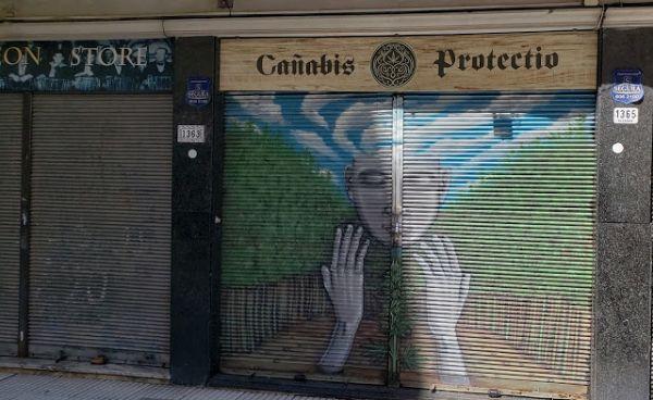 canabis en uruguay