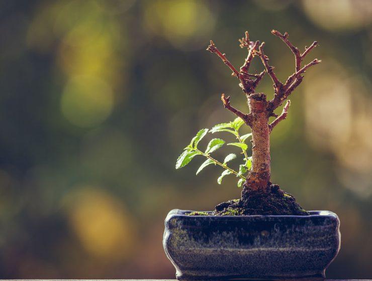 resiliencia dificultades