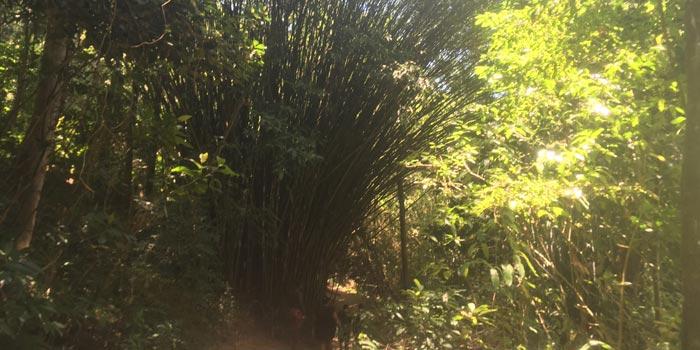 Caminio a Cachoeira da Feticeira