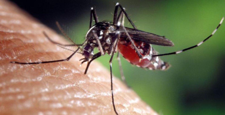 dengue en salta