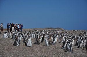 cerca de los pingüinos