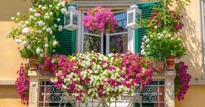 balcones malvones flores