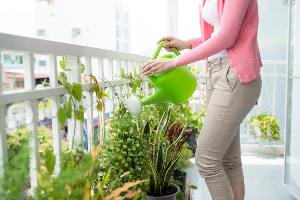 semillas de pasto para jardín