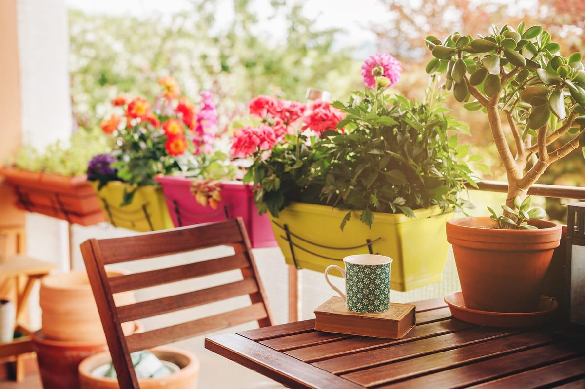 como sembrar jardin