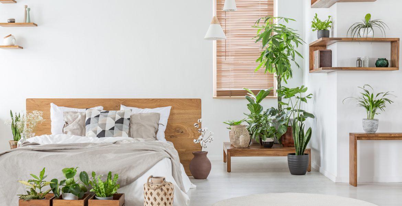decoracion de interiores con plantas