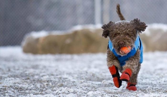 capa y zapatos para perros