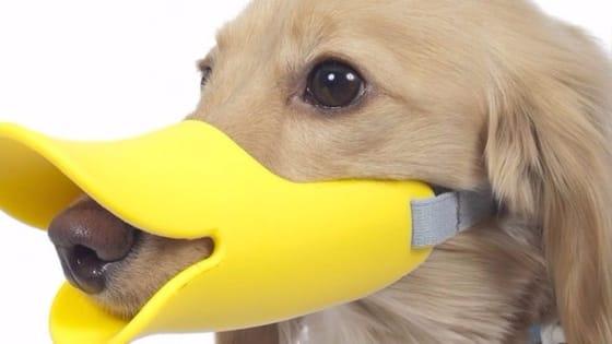 inventos raros pico de pato