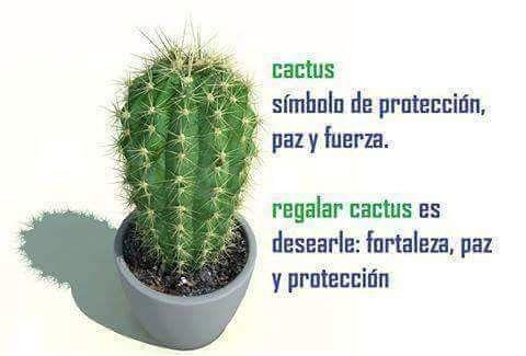 frases para regalar cactus