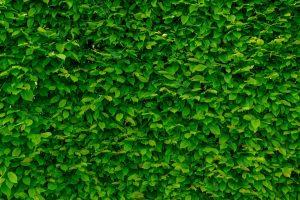 nombres de arbustos