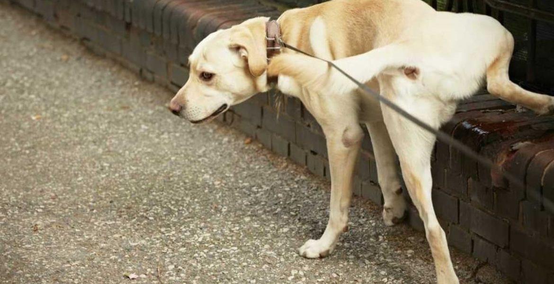 perro orinando en la calle