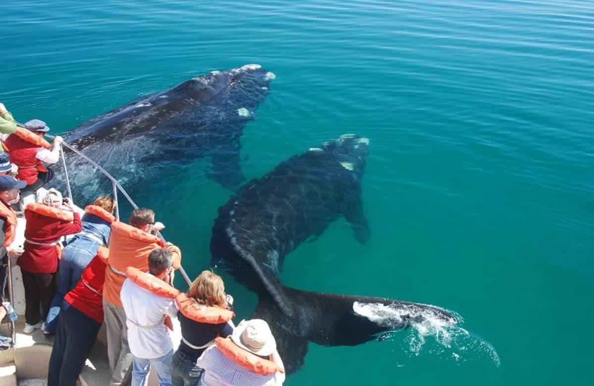 avistaje de ballenas