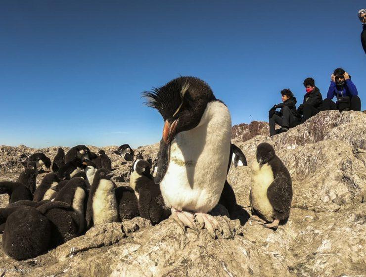 temporada de pinguinos