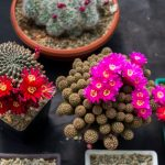 como cuidar un cactus