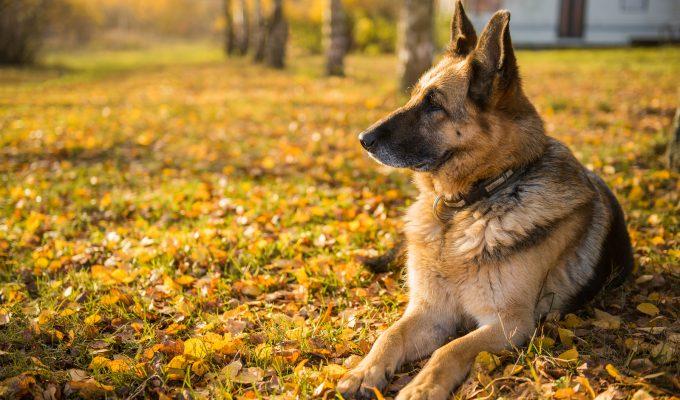 Día Nacional del Perro