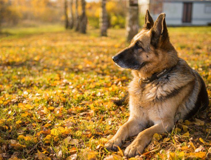 la edad de los perros