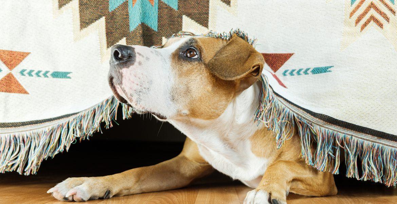 mascotas y pirotecnia