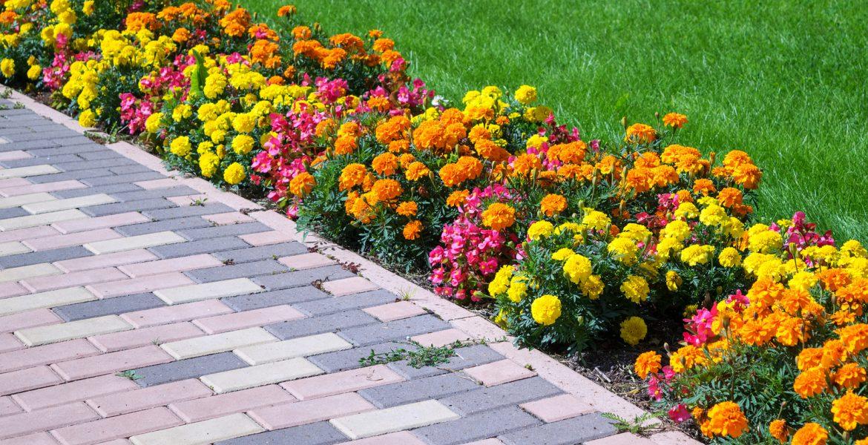 flores para el jardin