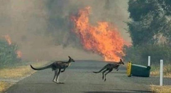 australia incendios
