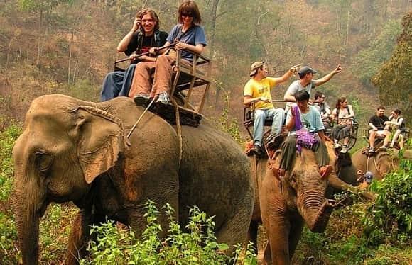 pasear en elefante