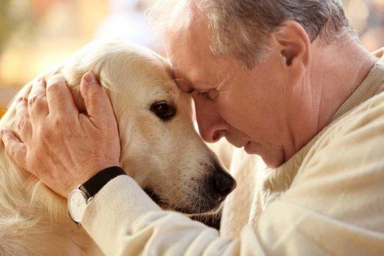 perros viejo cuidados envejecer