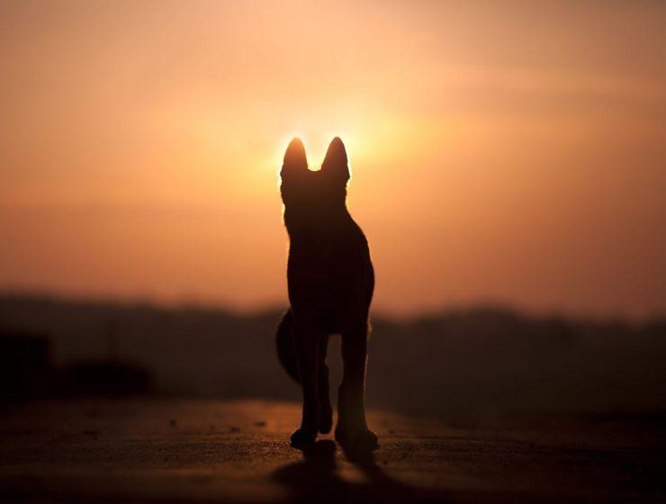 los perros nunca mueren