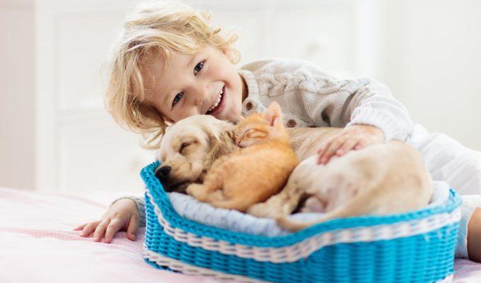 son felices los perros mascotas
