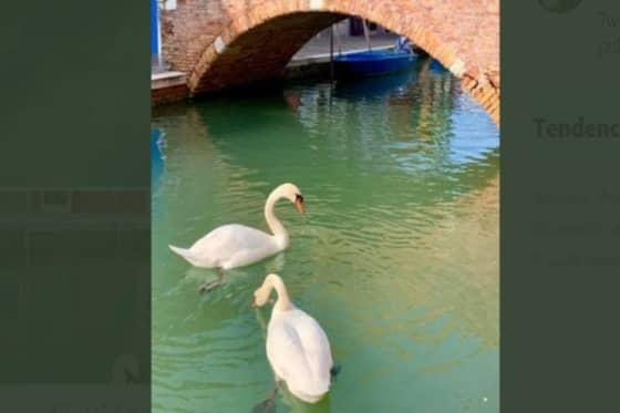 venecis sin turismo