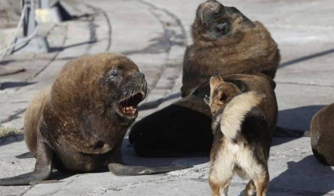 mar del plata coronavirus lobos marinos