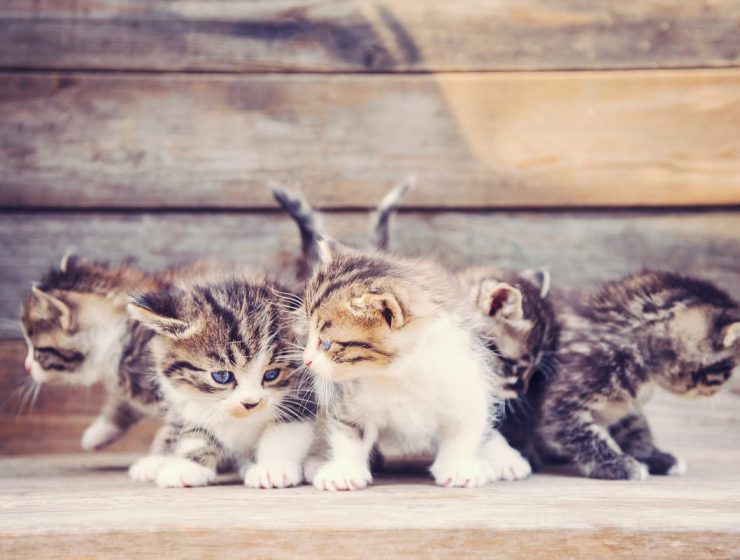 gatos rescatados