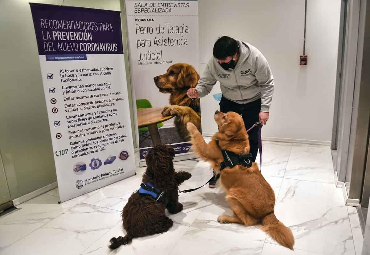 perros de terapia de asistencia