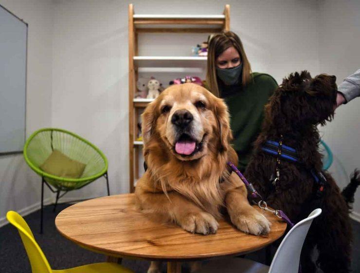 Perros de Terapia para Asistencia Judicial
