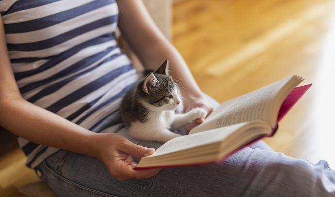 mascotas gatos mimos