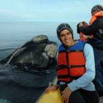 puerto piramides avistaje de ballenas