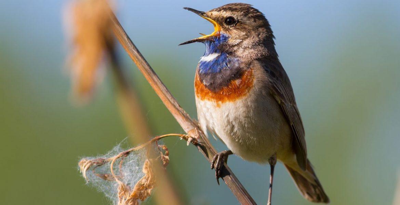 el canto de las aves alivia el estres
