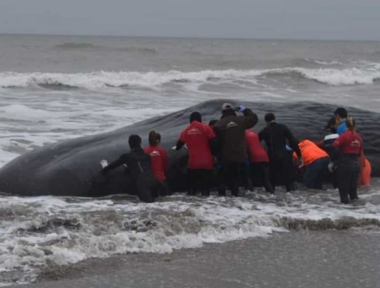 ballena varada
